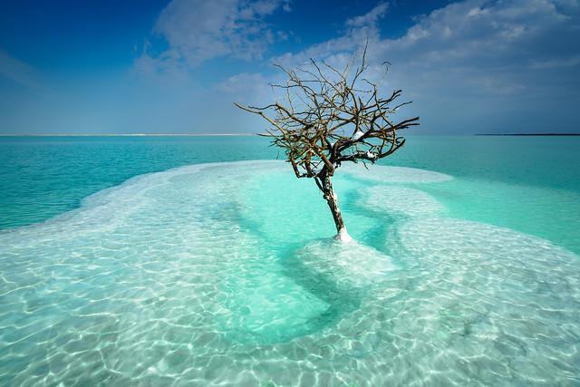 The Dead Sea Tree (DSC01584)