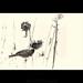 Winter Birds by imageseekertoo (Wendy Elliott)