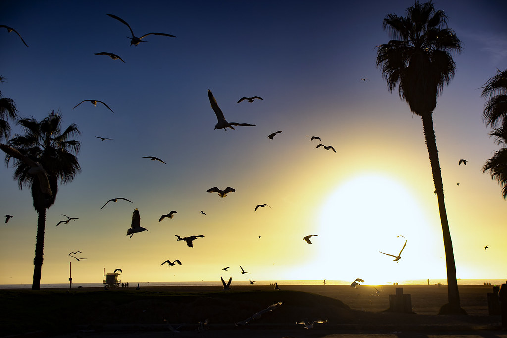 Seagulls Fly Above Venice Beach