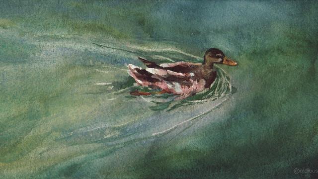 Pato nadando