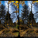 More Woods 3 (Stereo) by Tom.Bentz
