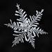 Snowflake-a-Day No. 9 by Don Komarechka