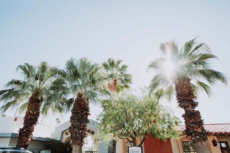 Palm Springs Palm Trees CA