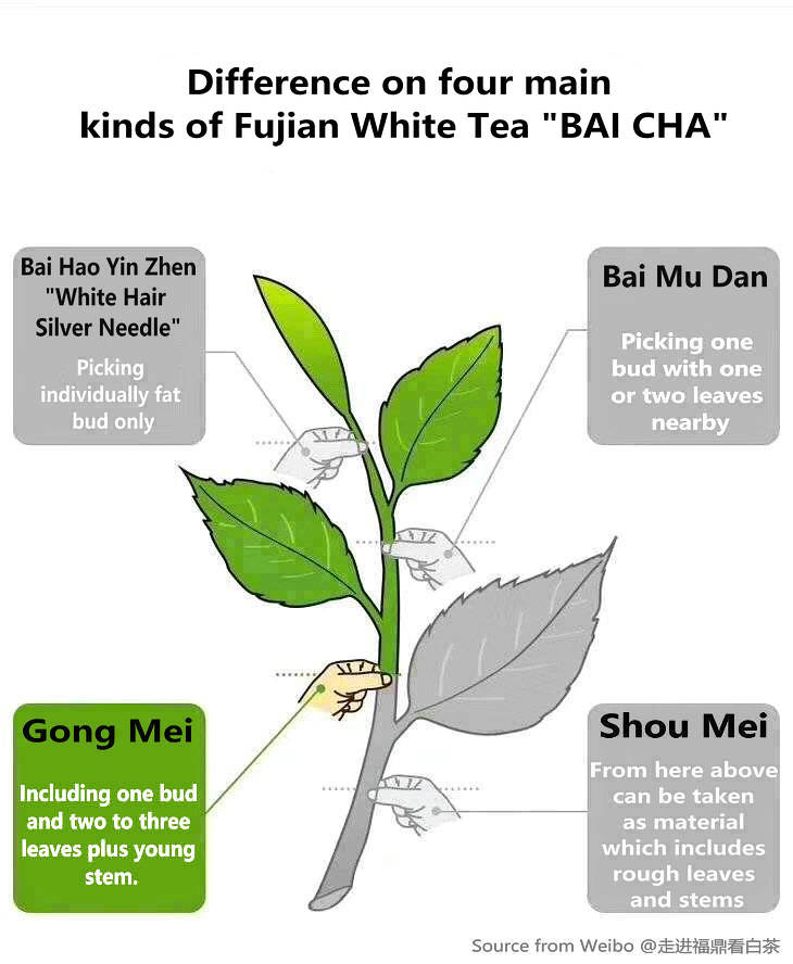 Just from one ANGLE to see difference on 4 main kinds of white tea from Fujian province.