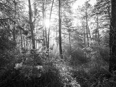 Deep in the woods - Photo of Saint-Germain-sur-École