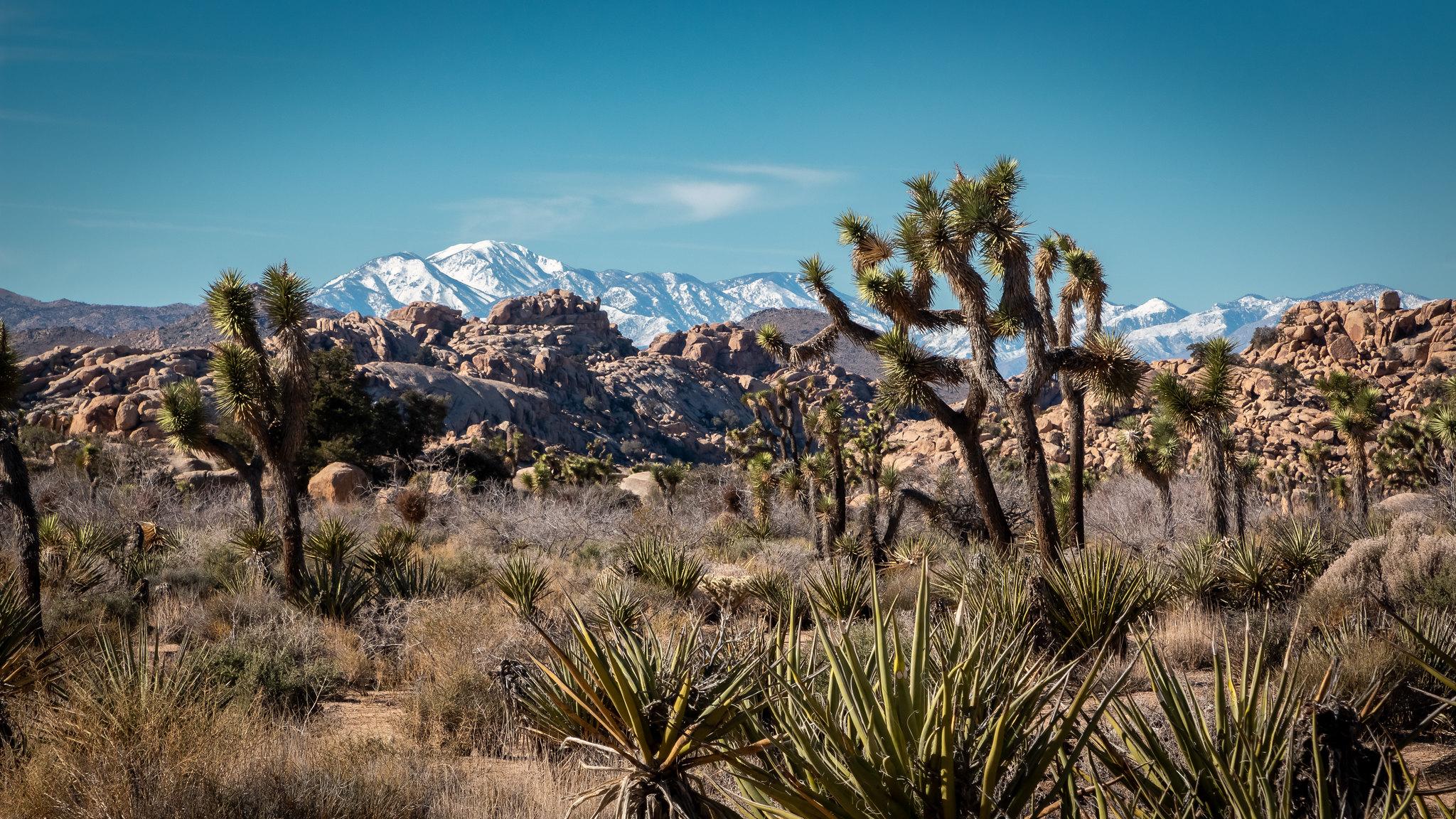 Joshue Tree NP - Californie - [USA]