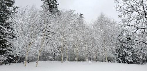 Snowed In Finnerty Gardens