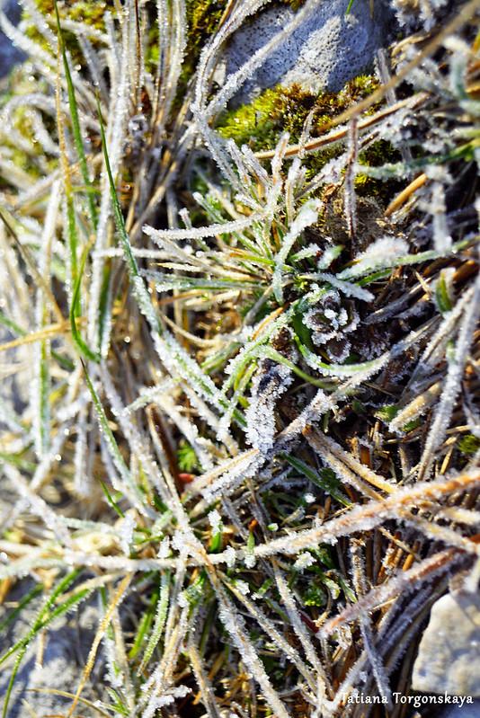 Трава, покрытая инеем