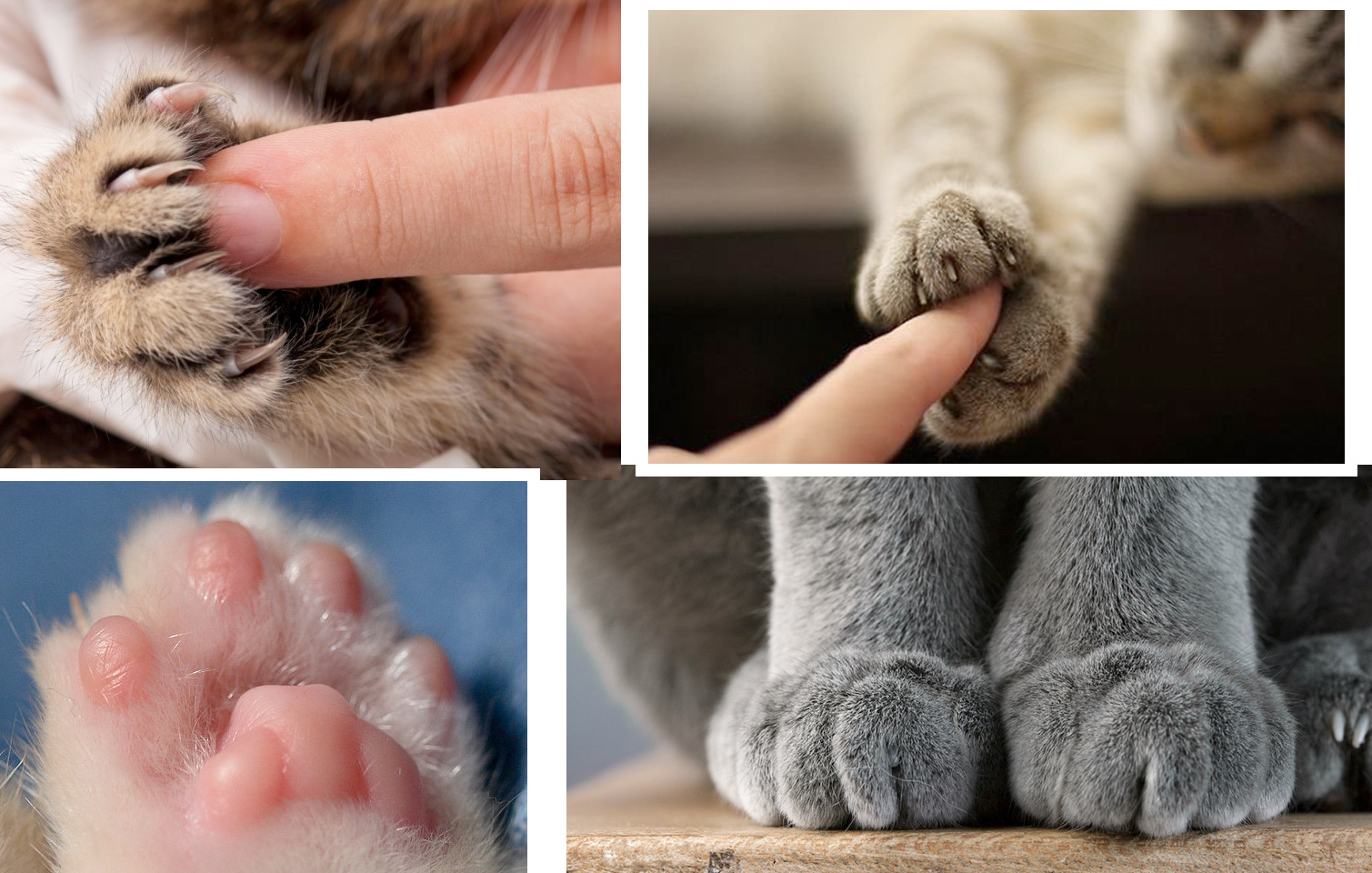 Движения лапок кошек фото