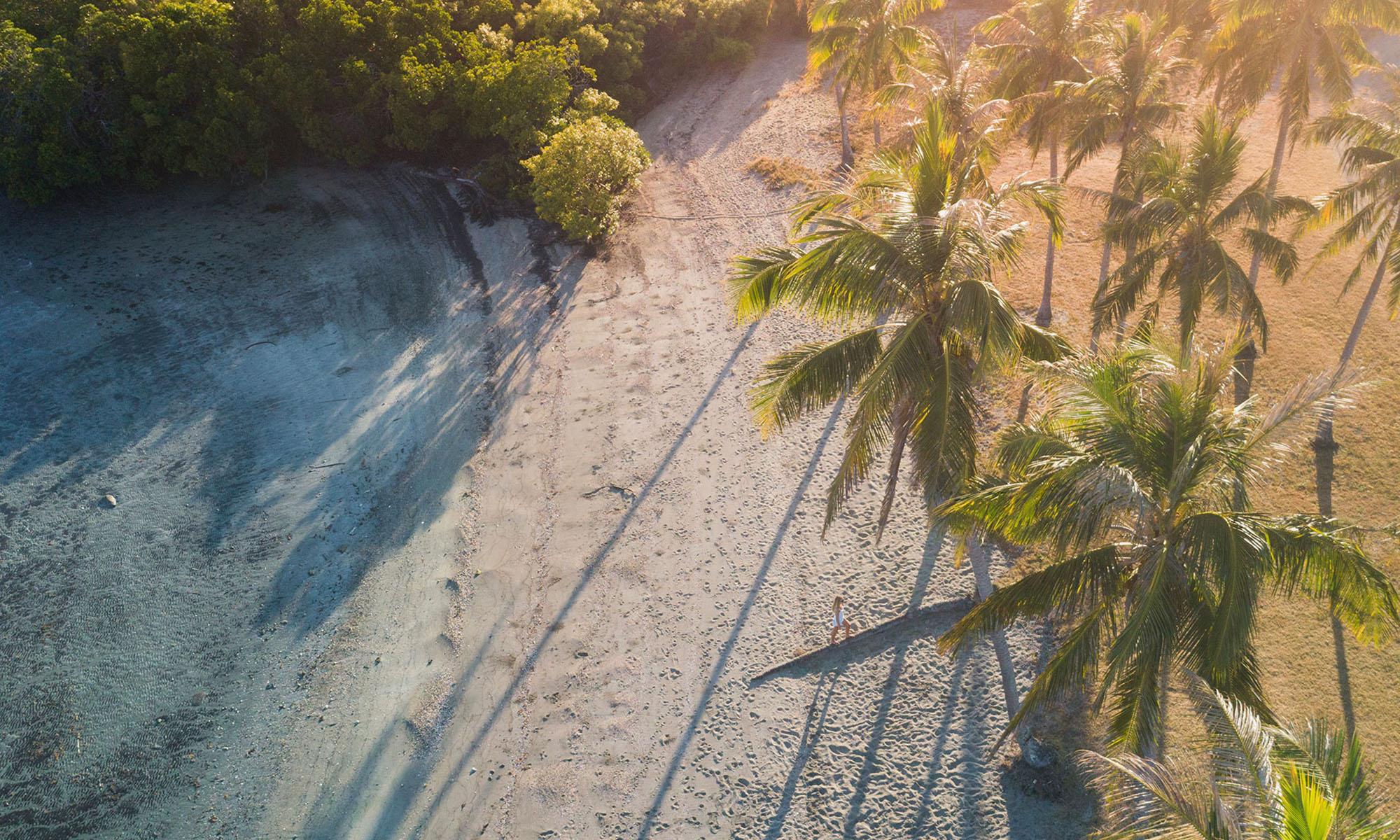 Palms-Beach