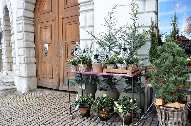 Flower Shop Hauptgasse Solothurn 24,11,2018 (1)