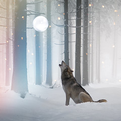 Dream #43 - Canis Lupus