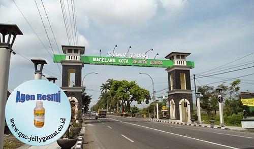 Stokis / Agen QnC Jelly Gamat Magelang, Mungkid, Sawangan, Borobudur