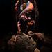 Pulpo en el interior de una nacra muerta by Marc Casanovas