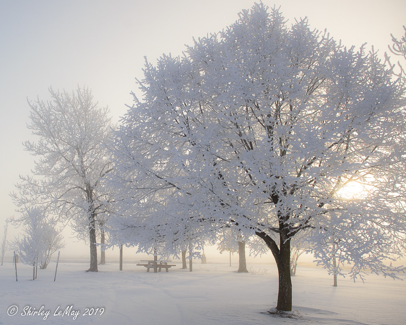 Like a Dream Shirley LeMay #hoarfrost