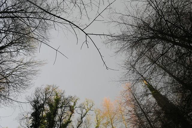 IMG_1003 Trees on Farnham Estate