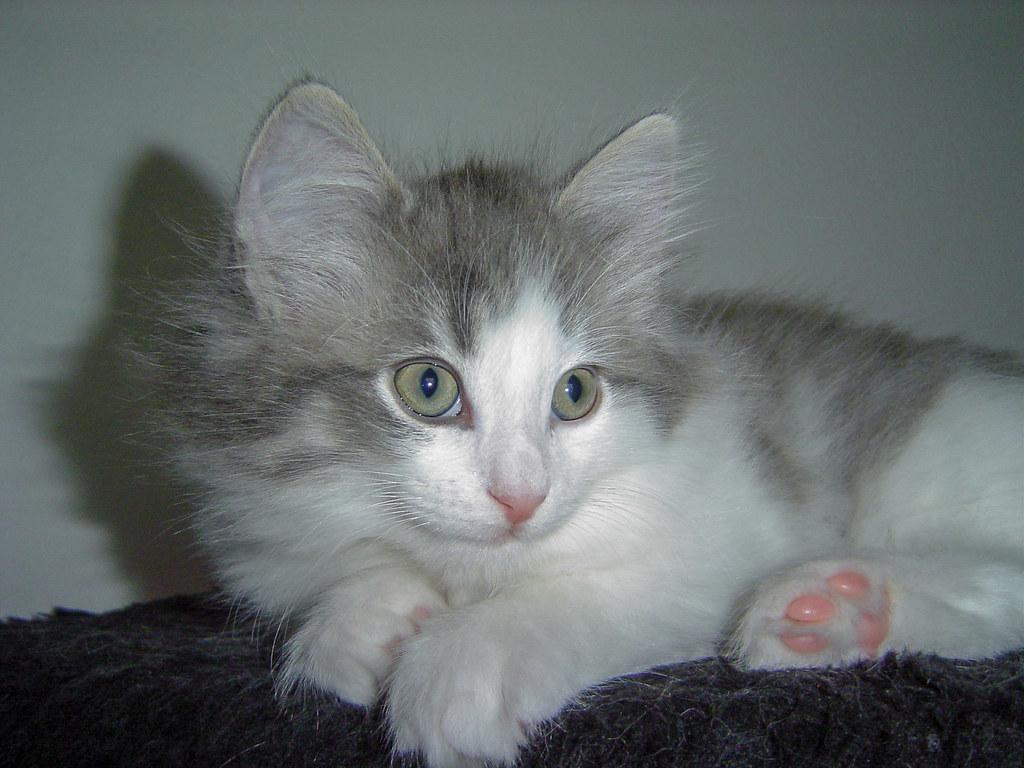 Fotos de animales de todo tipo incluyendo mascotas que más te gustan - Página 13 31376058987_3b438cbbb2_b