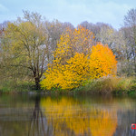 Autumn on the River Ribble