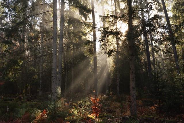 Percée du soleil, Nikon D7200, Sigma 10-20mm F3.5 EX DC HSM