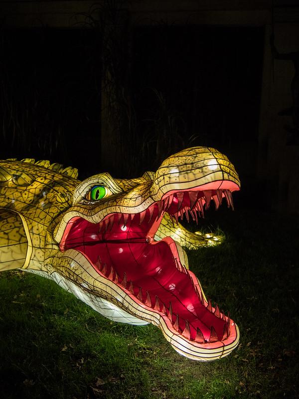 Espèces en voie d'illumination : Le crocodile et le boa 32362043568_01ae8de7db_c