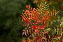 leaves 0490