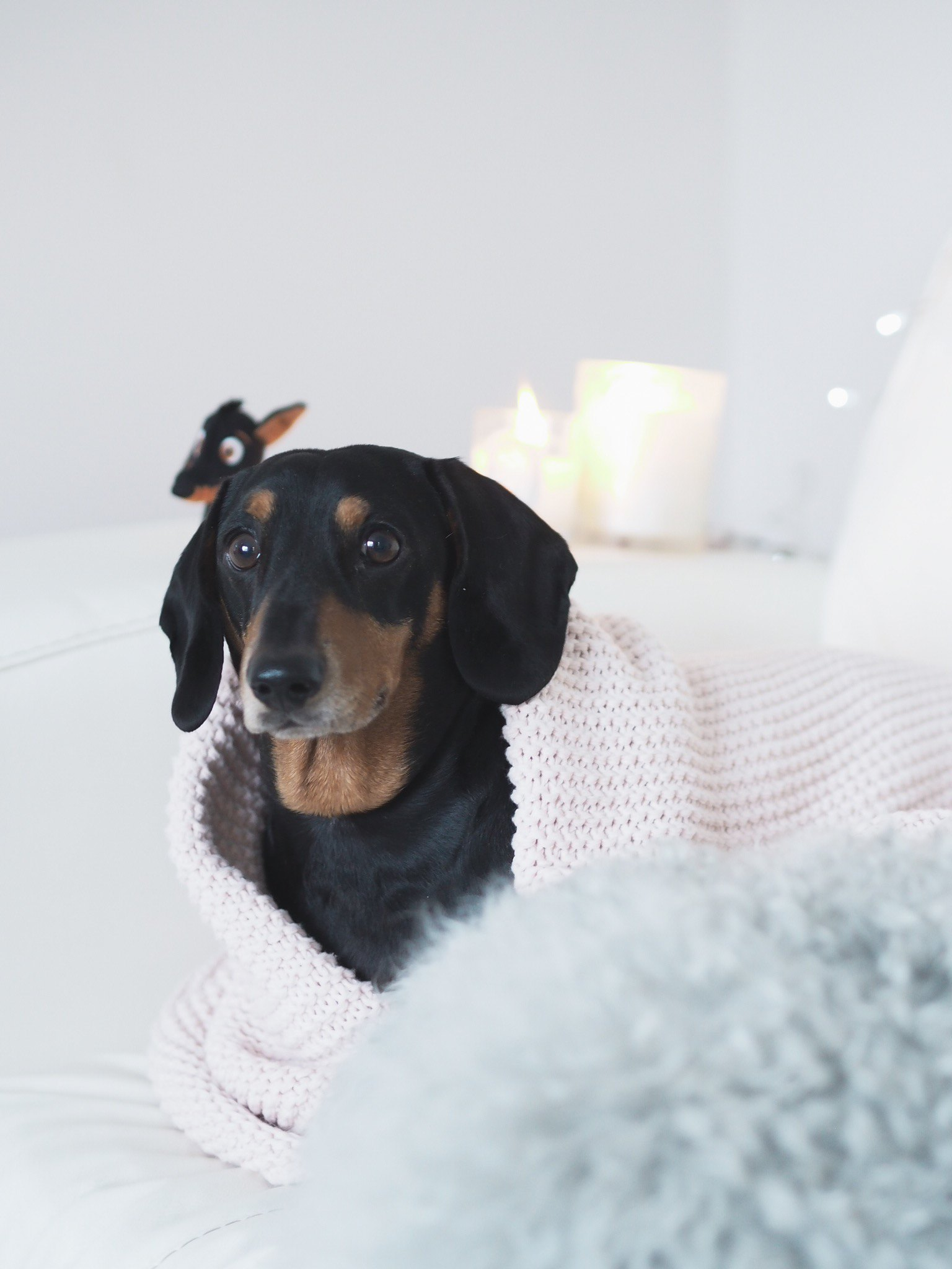 how to relax your dog bonfire night