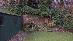 magenta garden