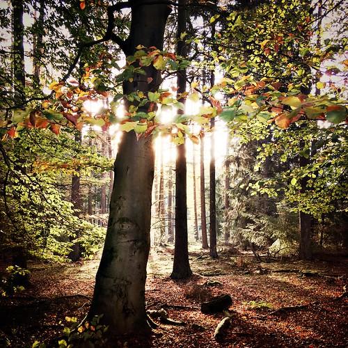 autumn forest 🍁🍄🍂