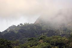 Rainforest Udzungwa Mountains National Park in Tanzania