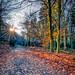 _TGM3407_20181118_1410_Nikon_D500_AuroraHDR2019-edit.jpg