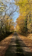 Walk in the Woods in November. French countryside. - Photo of Chantecorps