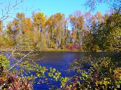 Fall color along the Willamette River in Eugene, Oregon