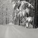 Winterwelt  Bronica S2A, Kodak TMax 100, Rodinal 1+25
