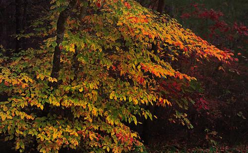 autumn fall georgia color forest landscape leaves nature tree canon