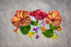 hibiscus1-texture
