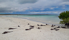 Iguana Bay