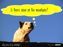 Is there snow on the mountains? #roofdog