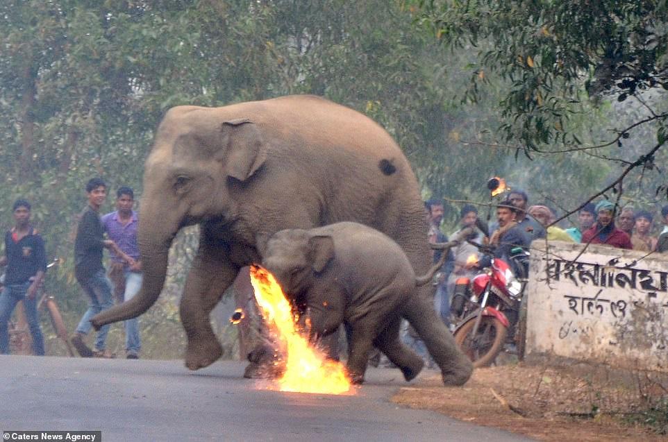 Elefante-y-su-cria