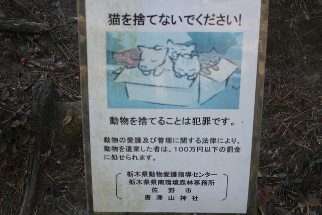 karasawayama-neko015