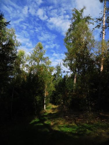 20170930 03 109 ostbay Wolken Herbst Wald Bäume Weg
