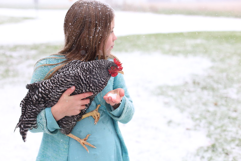snow chicken
