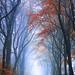 Herbstlichen Dank by PixTuner