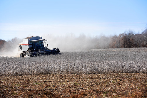 Soy bean dust from a combine drifts across a Lincoln County field off Peeler Road.