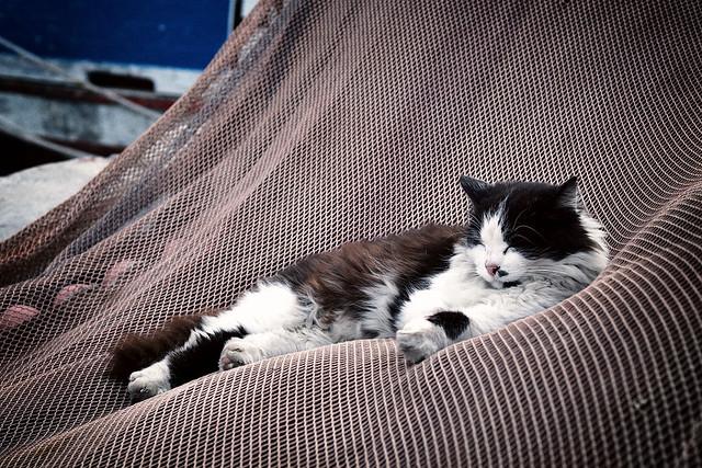 Katze entspannt im Fischernetz, Sony SLT-A58, Sony DT 35mm F1.8 SAM (SAL35F18)