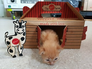 Kitten in the Barn