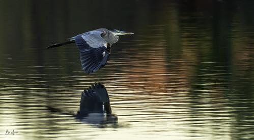 birds centerporteagles