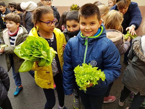 Récolte et dégustation de salades en CE2 A & B
