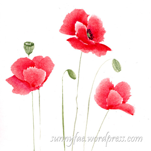 poppies painted with watercolour
