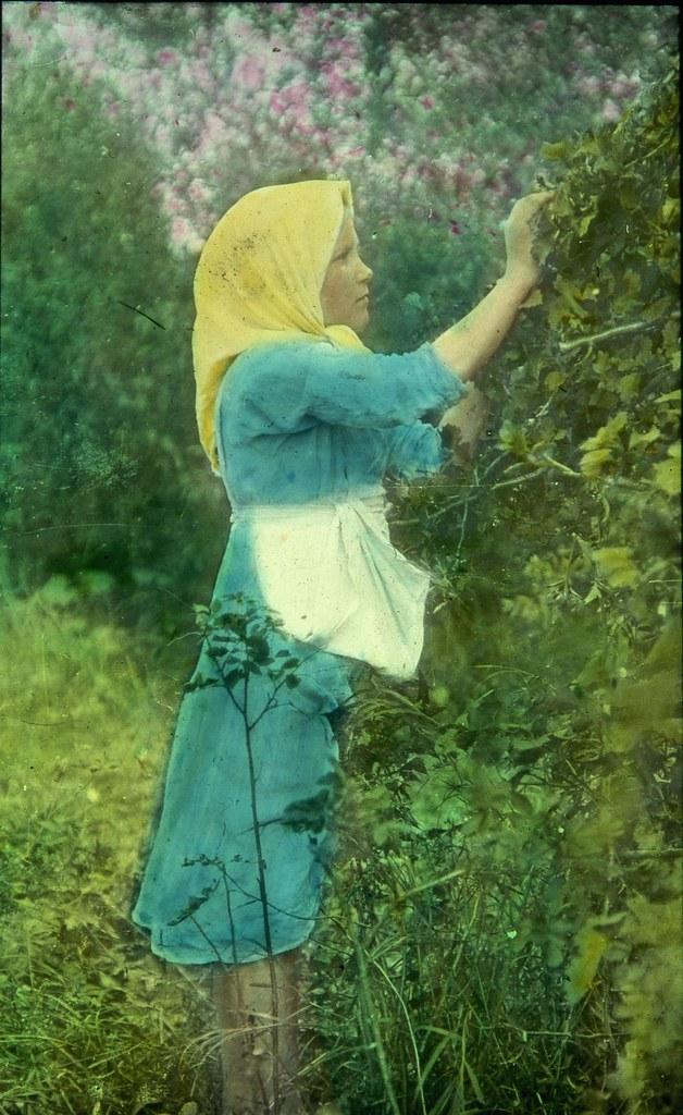 Девочка собирает фрукты