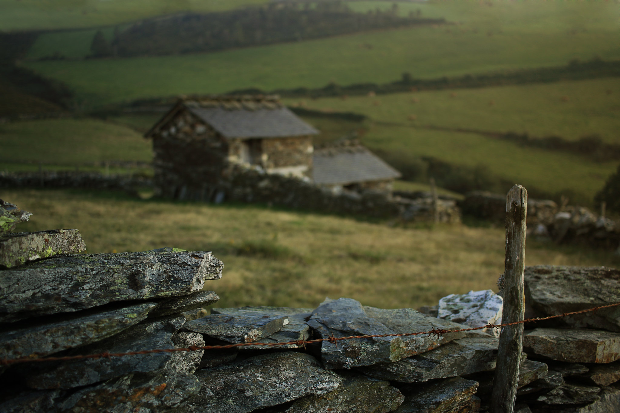 Life in the Moors I